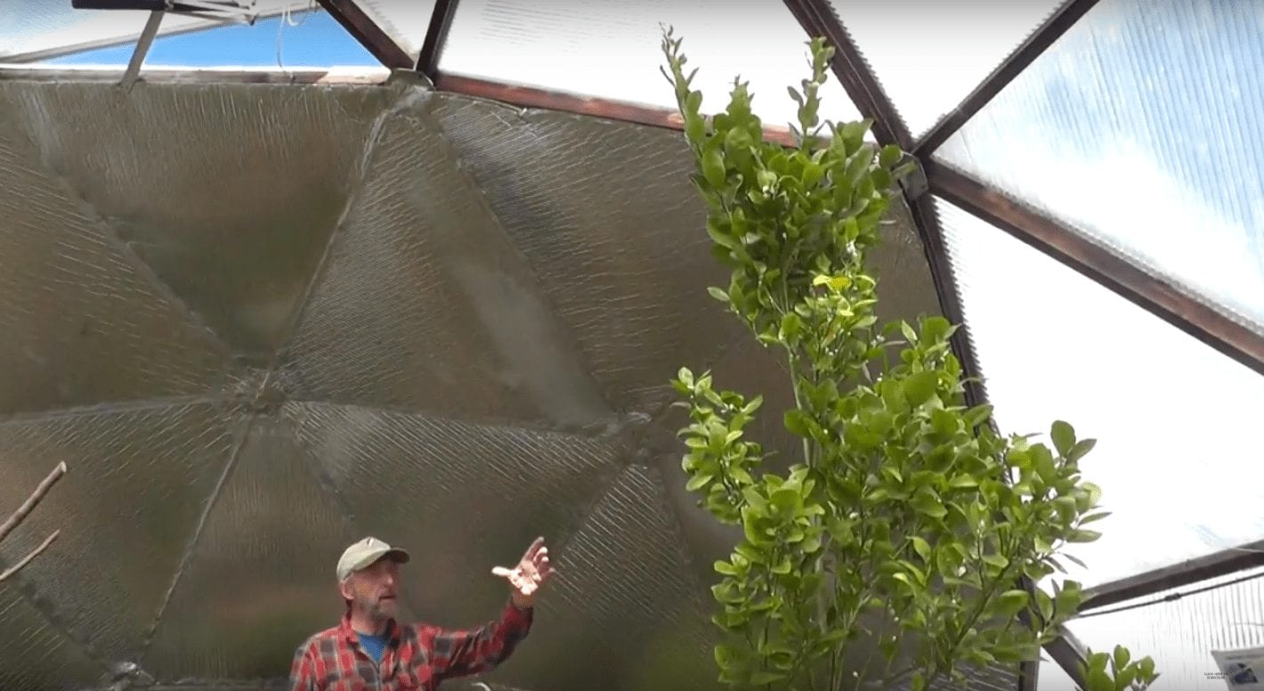 Orange tree in an insulated greenhouse