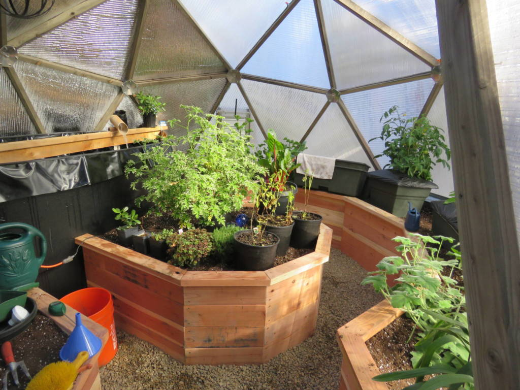 Redwood raised beds in geodesic dome greenhouse