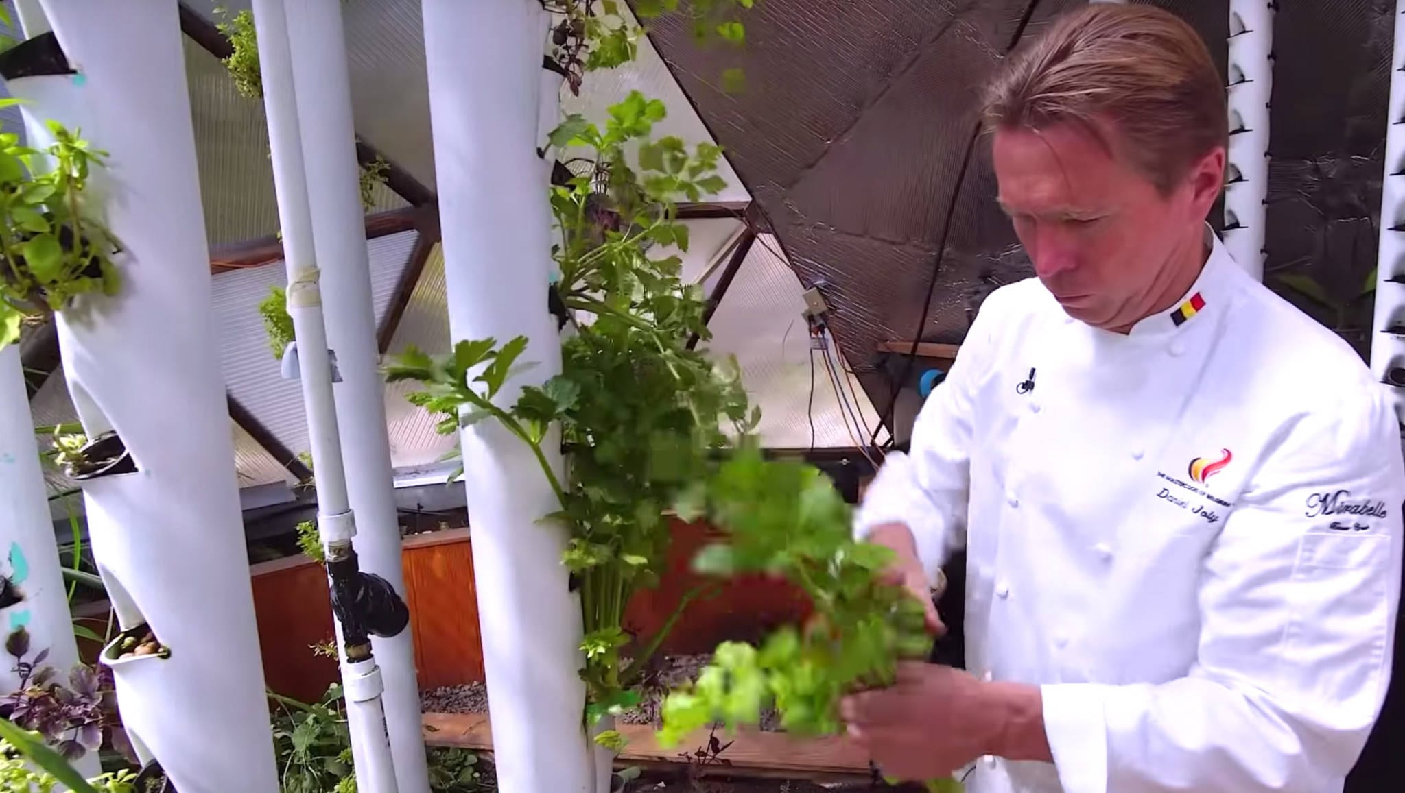 chef-picking-herbs