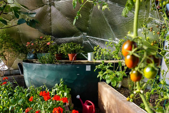 cooling pond and spitter in a geodesic greenhouse