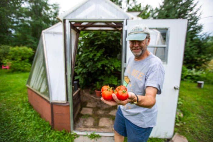 Growing tomatoes in a sustainable greenhouse in Maine
