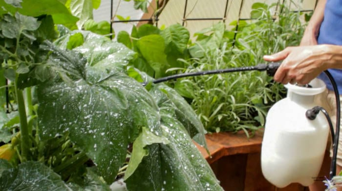 spray powdery mildew