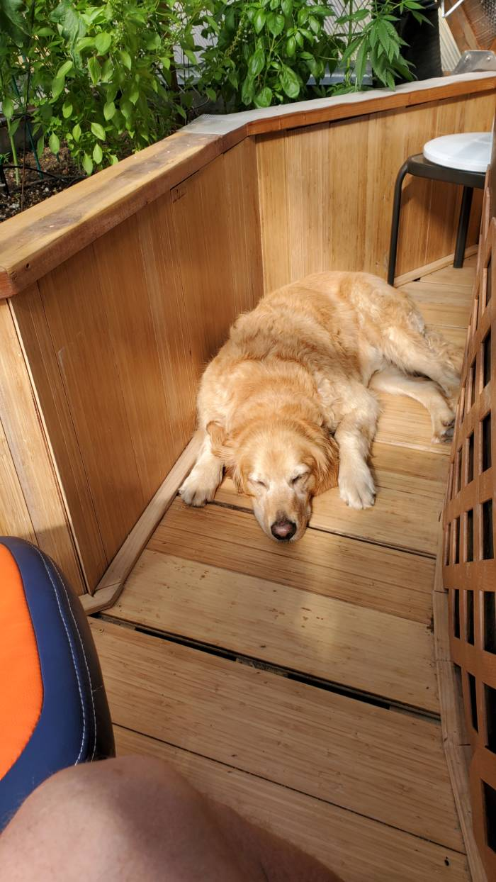 dog napping inside automated greenhouse