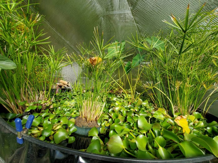 how to prepare your greenhouse for winter - pond plants