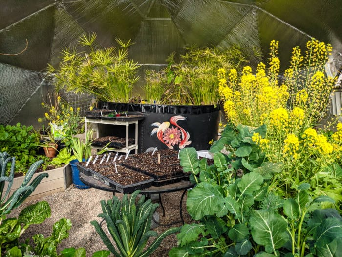 Thriving garden in a Growing Dome Greenhouse in the winter