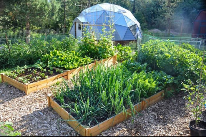Beautiful garden with 22' growing dome geodesic greenhouse