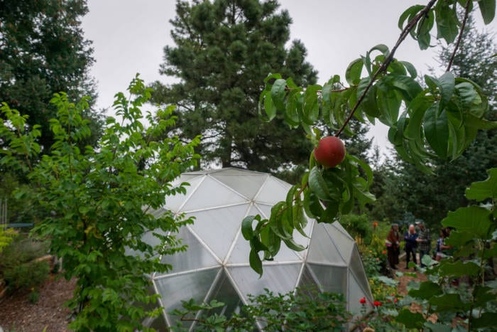 Peach trees outside a Growing Dome Greenhouse in Colorado Springs